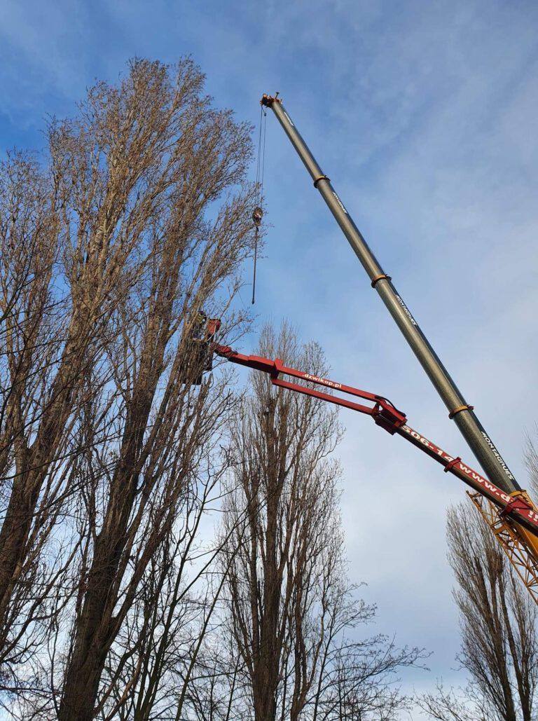 Przycinanie i wycinka drzew